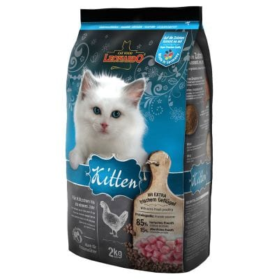 Leonardo® Kitten