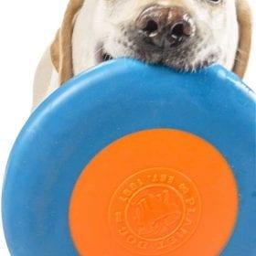 Frisbee Planet Dog Zoom