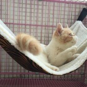 Prevue Hamaca para Hurones y Gatos